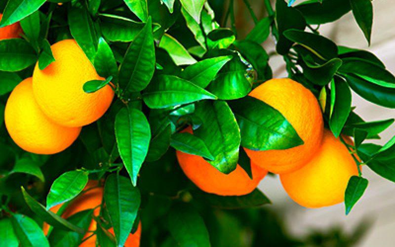blumen-schoenleber_altdorf_aktionen_orangen